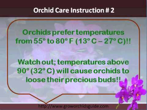 Orchid Care Instructions A Proven Checklist Youtube
