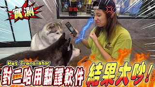 實測,女主人和二哈利用翻譯軟件溝通結果大吵!Pet Translator with Husky (Jeff Inthira & Kungfu Panda The Husky)