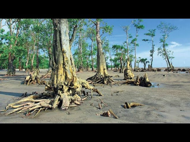 how-the-sunderbans-is-losing-its-mangrove-forest