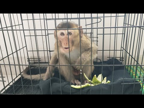 Dad was worried when he noticed poor Ticky monkey had diarrhea