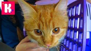 Кошечка Мурка и Катя едут в Котокафе на кошачью вечеринку / Много кошек / котята играют с детками