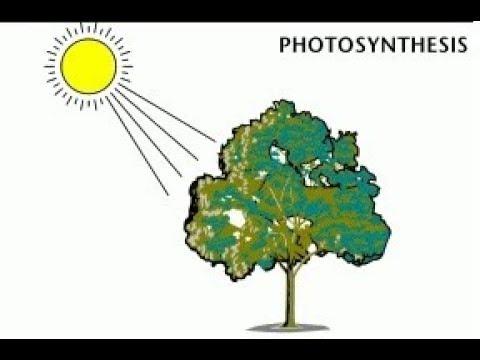 Manfaat Energi  Matahari  Bagi Hewan Manusia Tumbuhan