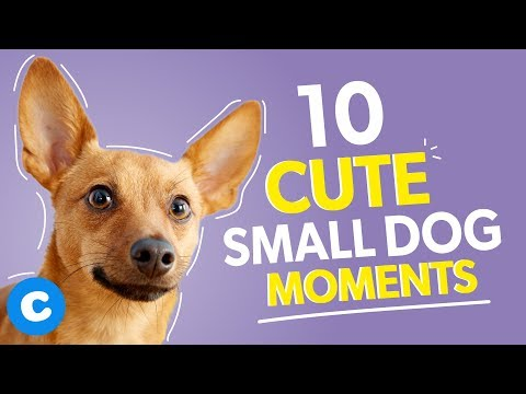 10-super-cute-small-dogs-doing-small-dog-things