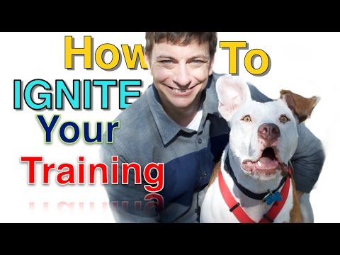 How to KEEP Your Dog Interested in Training!