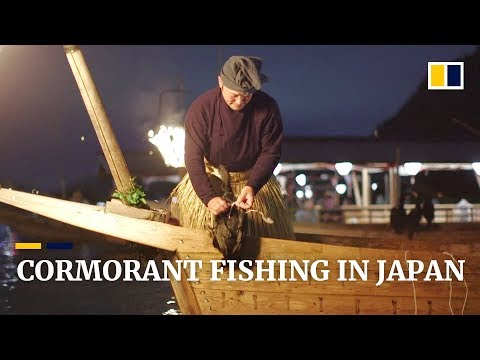 Japan's 'usho' Keep Cormorant Fishing Ritual Alive