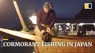 Japan's 'usho' keep cormorant fishing ritual alive