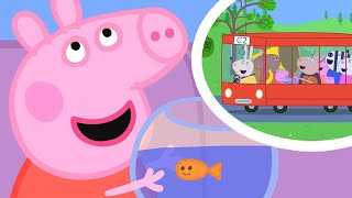 Peppa Pig Songs | The Wheels on the Bus Song Compilation! Peppa Pig Official | New Peppa Pig