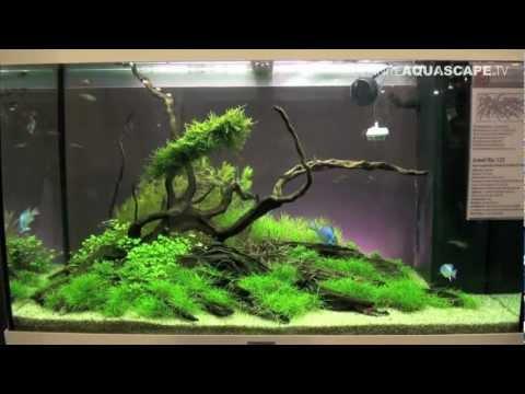 Aquascaping - Aquarium Ideas from Aquatics Live 2012, part 2