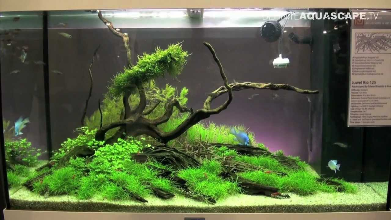 aquascaping aquarium ideas from aquatics live 2012, part 2 youtube