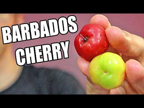 Barbados Cherry (Acerola): The Tiny Fruit With Tons of Vitamin C! Weird Fruit Explorer