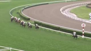 【競馬】2016 札幌日刊スポーツ杯(1000万下) ウムブルフ