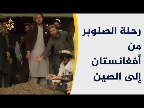تدشين خط جوي لتصدير الصنوبر من أفغانستان للصين  - نشر قبل 4 ساعة