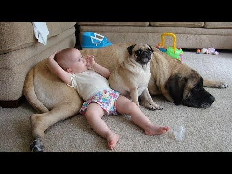 Protection Dog -  Dogs Protecting Kids beacause they are best friend