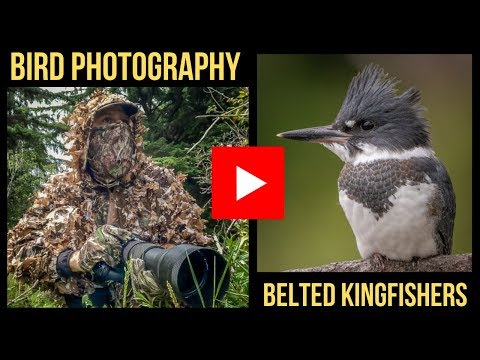 BIRD PHOTOGRAPHY - PHOTOGRAPHING BELTED KINGFISHERS IN BC (Behind The Shot Video, 2019)