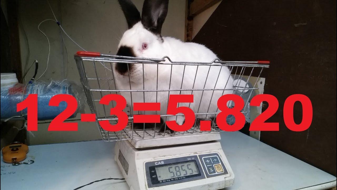 О чём вам расскажут кролики ИЛИ как он это делает Выращивание породных кроликов для племенной работы