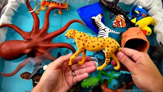#learncolors Learn Sea Animal and Zoo Animals Names Learn Colors Shark Toys For Kids