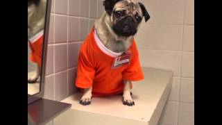 Orange Is The New Black - Pug Edition