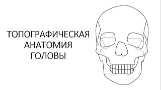 Топографическая анатомия головы. Часть 1.