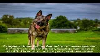German Shepherd Breeders In Germany Place
