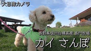 【犬目線カメラ】 長野県 信州白樺高原 長門牧場に行ってきました。 標...