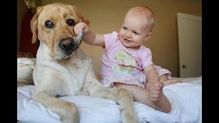 Собаки и дети, лучшие друзья | Часть 3 | Dogs and Baby, the best video
