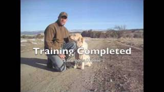 How To Train A Golden Retriever