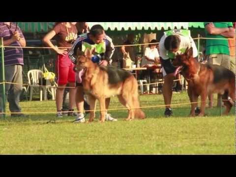 GSDF Pre-Sieger Show Nov 4, 2012 - Philippines