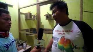 KISAH SUKSES - Pengusaha Kue Aris Excellent Bird Farm Yogyakarta Lahirkan Lovebird Trah Jawara