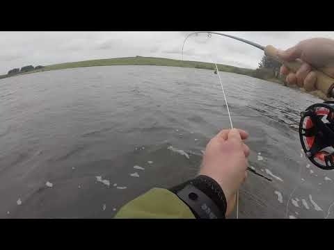 Siblyback Lake Blue Trout.