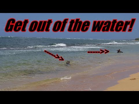 BEWARE of this animal at the beach in Kauai, Hawaii | Our life in paradise | Kapaa | Family vlogging