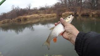 Рыбалка в дождь Ловля на поплавок плотвы и голавля в последний день октября