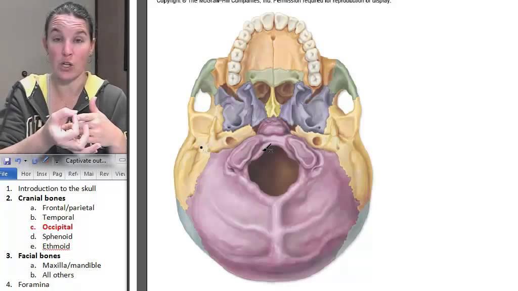 Occipital Bone Skull Human Anatomy Course Youtube