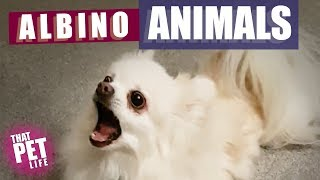 Weird Albino Animals 🤔 | Funny Animal Compilation