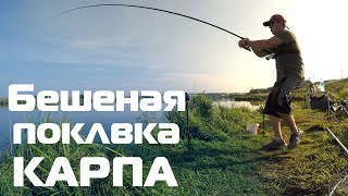 Бешеная поклевка КАРПА Рыбалка с ночевкой Ловля карпа на фидер