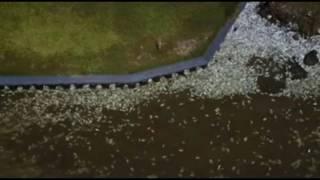 Massive Fish Kill In Texas