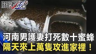 蜜蜂的報復!河南男護妻打死數十蜜蜂 隔天竟來上萬隻攻進家裡! 關鍵時刻 20180704-3 黃創夏