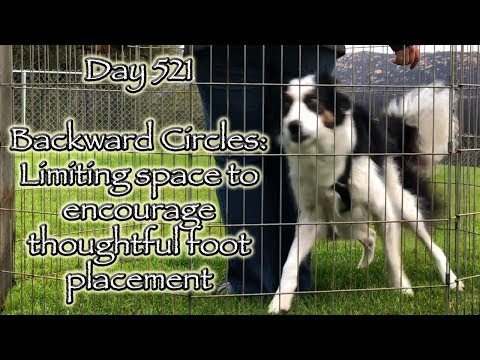 Day 521: Backward Circles (Doing some Re-Training)
