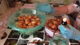 Подготовка лука семейного к посадке. Как защитить лук от луковой мухи.