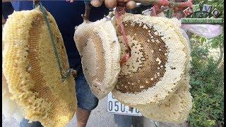 Theo chân thợ đi lấy mật ong ruồi ở An Giang - Khám phá vùng quê