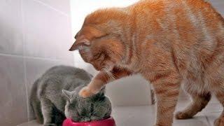 Лучшая подборка приколов с животными 2016 СМЕХ ДО СЛЕЗ | The best selection of jokes with animals