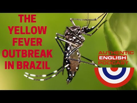 Episode 6 -- The Yellow Fever Outbreak in Brazil & Present Perfect x Simple Past (Part 1)
