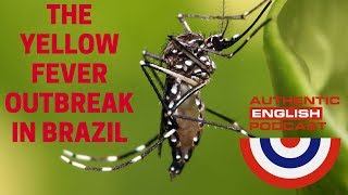 episode 6 the yellow fever outbreak in brazil present perfect x simple past part 1