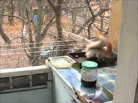Балкон своими руками - для украшения Вашего дома