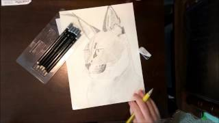 Speeddraw - Caracal (Pencil Drawing)