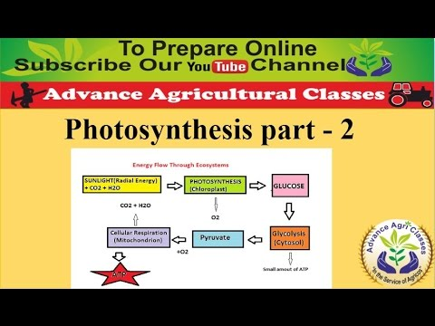 Photosynthesis part - 2 (Hindi/English) Agricultural Field Officer IBPS