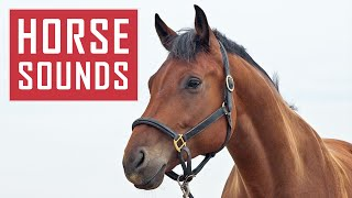 10 HORSE SOUNDS | Horses Neighing, Galloping and More HD Sound Effects
