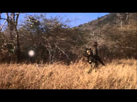 The 1st Australian task force walks through forest in South Vietnam. HD Stock Footage