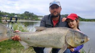 ТОЛСТОЛОБ ТРОФЕЙ ЛОВЛЯ ТОЛСТОЛОБА НА ТЕХНОПЛАНКТОН рыбалка на толстолобика