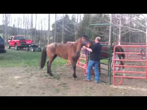 Horse breeding - YouTube