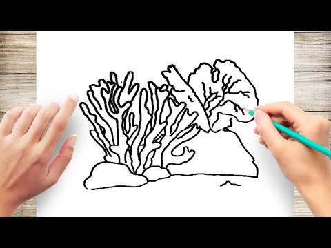How to Draw Coral Step by Step for Kids